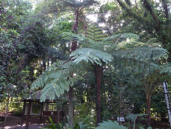 BotanicG1.jpg